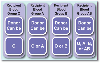 Blood Group Compatability