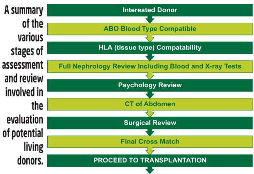 Living Donor Evaluation Stage